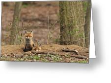 Peeking From The Fox Hole Greeting Card by Everet Regal