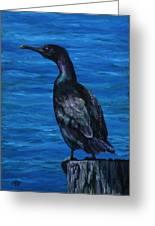 Pelagic Cormorant Greeting Card by Crista Forest