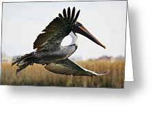 Pelican About Turn Greeting Card by Paulette Thomas