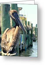Pelican On A Post Greeting Card by Dorothy Menera