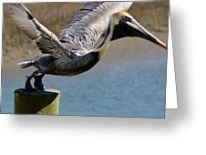 Pelican On His Tip Toes Greeting Card by Paulette Thomas