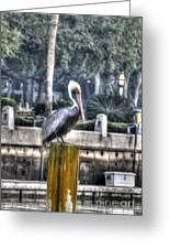 Pelican On Water Post Greeting Card by Dan Friend