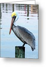 Pelican Perch Greeting Card by Benanne Stiens