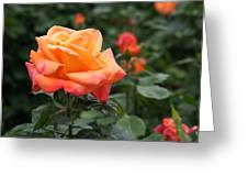 Pensioners Voice Roses Greeting Card by Rona Black