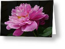 Peony Blossoms Greeting Card by Lingfai Leung