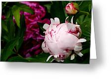 Peony Life Greeting Card by Rona Black