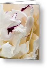 Peony Greeting Card by Steven Ralser