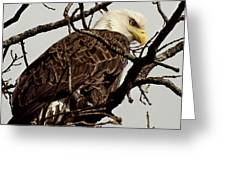 Perched On High Greeting Card by Thomas Young