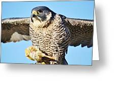 Peregrine Falcon With Chicken For Dinner Greeting Card by Paulette Thomas