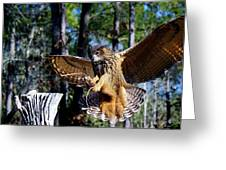 Perfect Landing Greeting Card by Paulette Thomas