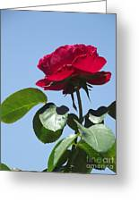 Perfect Red Rose Greeting Card by Cheryl Hardt Art