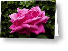 Perfect Rose Greeting Card by Terry Horstman