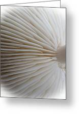 Perfect Round White Mushroom Greeting Card by Tina M Wenger