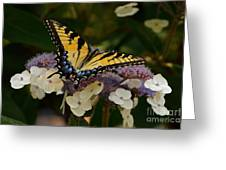 Perfect Tiger Swallowtail Butterfly Greeting Card by Byron Varvarigos