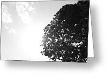 Perfect Tree Perfect Sunset Greeting Card by Shaun Maclellan