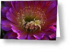 Perfectly Pink Greeting Card by Saija  Lehtonen