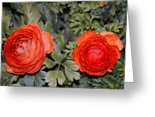 Persian Buttercups Greeting Card by Sonali Gangane