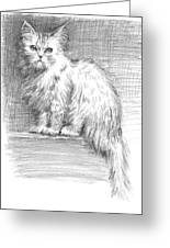 Persian Cat Greeting Card by Sarah Parks