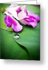 Peruvian Lily Raindrop Greeting Card by Priya Ghose