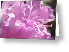 Petal Pink By Jrr Greeting Card by First Star Art
