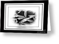 Petals And Shadows 2 Greeting Card by Kaye Menner