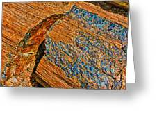 Petrified Forest Logs Greeting Card by Bob and Nadine Johnston