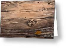 Petrified Wood Detail Greeting Card by Vivian Christopher