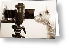 Pho Dog Grapher Greeting Card by Edward Fielding