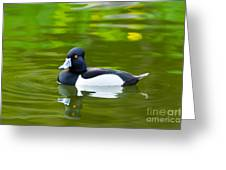 Photorealistic Crested Duck Greeting Card by Scott Laffin