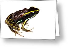 Phyllobates Lugubris With Tadpoles Greeting Card by JP Lawrence