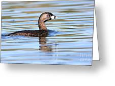 Pied-billed Grebe Greeting Card by Ruth Jolly