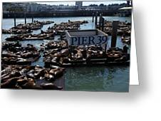 Pier 39 San Francisco Bay Greeting Card by Aidan Moran
