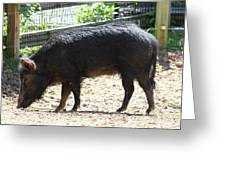 Pig - National Zoo - 01131 Greeting Card by DC Photographer