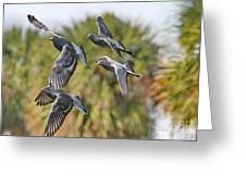 Pigeon Brigade Greeting Card by Deborah Benoit