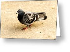 Pigeon Greeting Card by Tibor Co