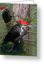 Pileated Woodpeckers Greeting Card by Pam Little