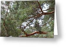 Pine Branches Greeting Card by Evgeny Pisarev