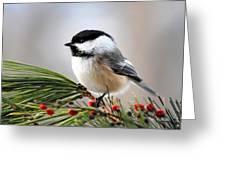 Pine Chickadee Greeting Card by Christina Rollo