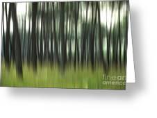 Pine Forest.blurred Greeting Card by Bernard Jaubert