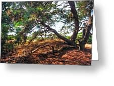 Pine Tree In Hoge Veluwe National Park 2. Netherlands Greeting Card by Jenny Rainbow