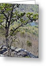 Pine Tree On A Mountain Greeting Card by Susan Leggett