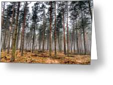 Pine Trees In Morning Fog Greeting Card by EXparte SE