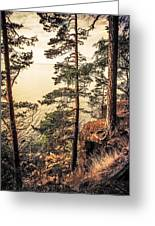 Pine Trees Of Holy Island Greeting Card by Jenny Rainbow