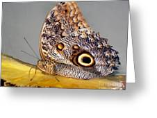 Pineapple Butterfly Greeting Card by Leslie Cruz