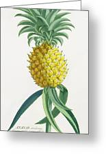 Pineapple Engraved By Johann Jakob Haid Greeting Card by German School