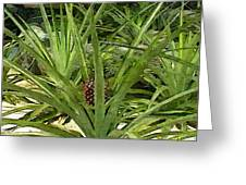 Pineapple Plant Greeting Card by Buzz  Coe