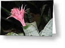 Pink Bromeliad Bloom Greeting Card by Kaye Menner