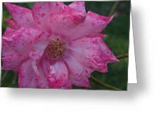 Pink Burst Greeting Card by Jessica Cruz