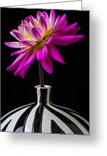 Pink Dahlia In Striped Vase Greeting Card by Garry Gay