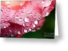 Pink Drops Greeting Card by John Rizzuto